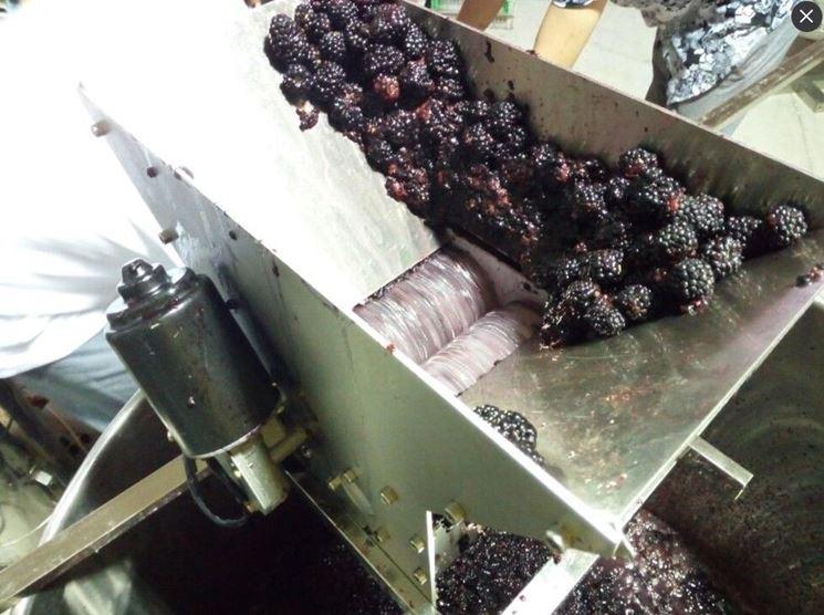 pigiatura uva con torchio elettrico