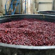 fermentazione uva