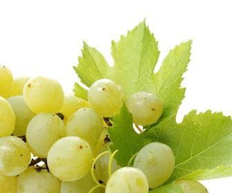 Curiosit� vino bianco