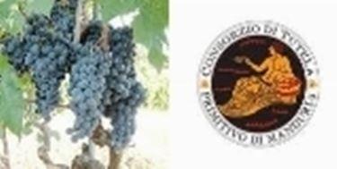 consorzio vino