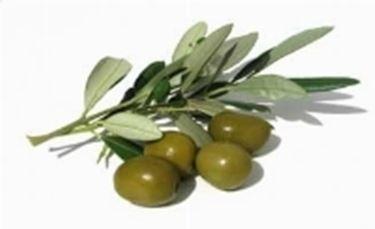 olio d^oliva sul viso2