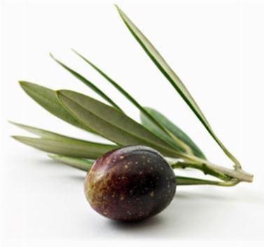 olio di oliva sulla pelle2