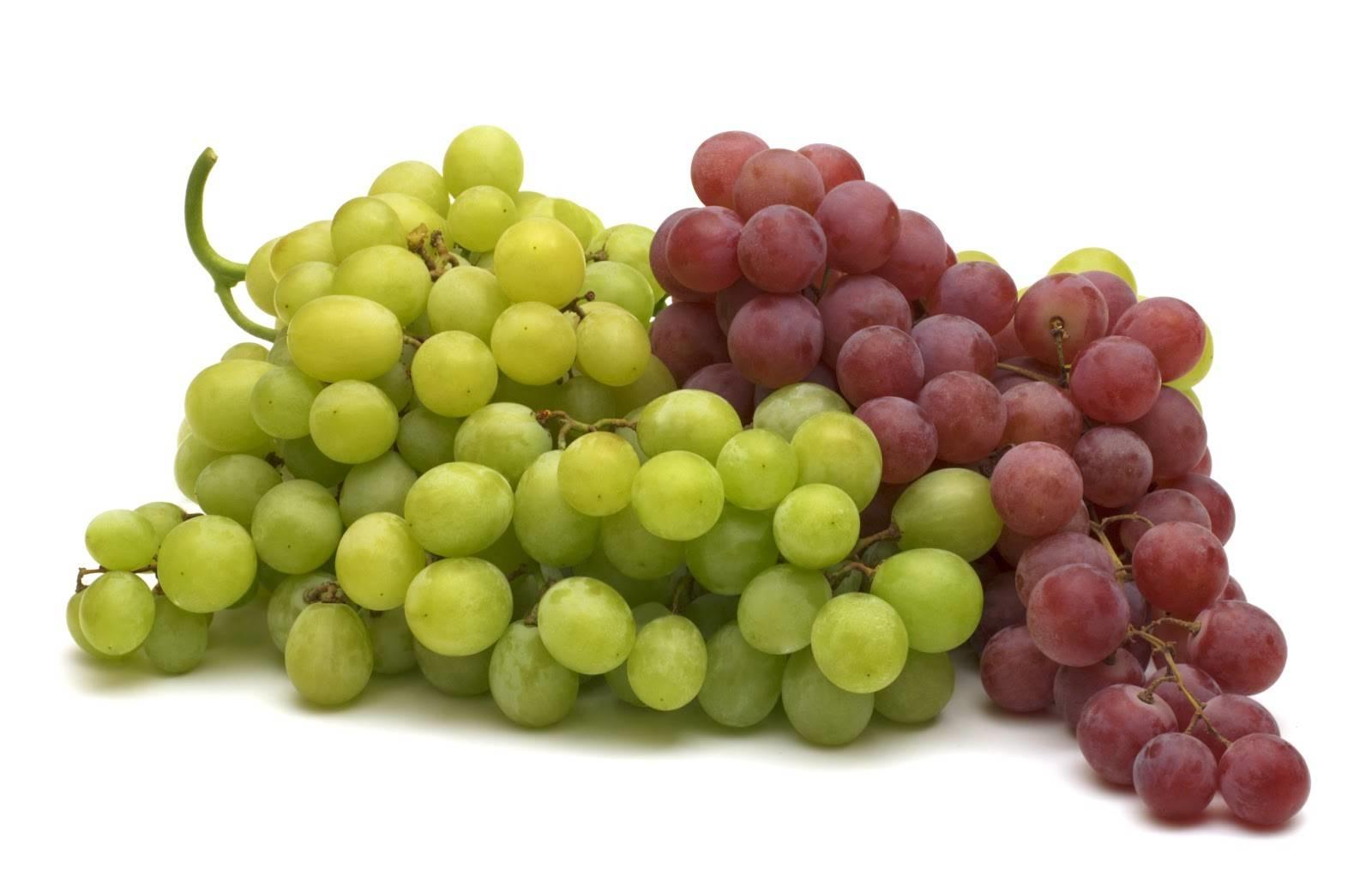 Coltivazione uva da tavola curiosit uva - Uva da tavola coltivazione ...