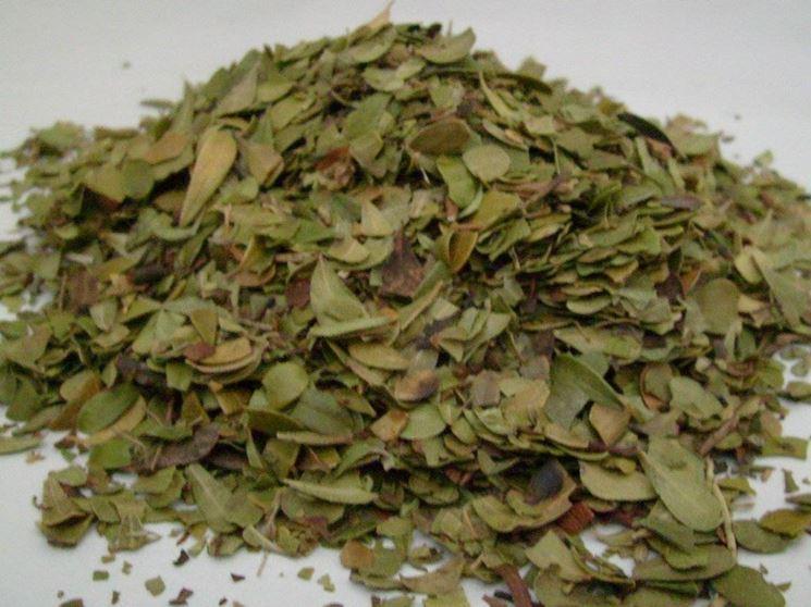 foglie ursina