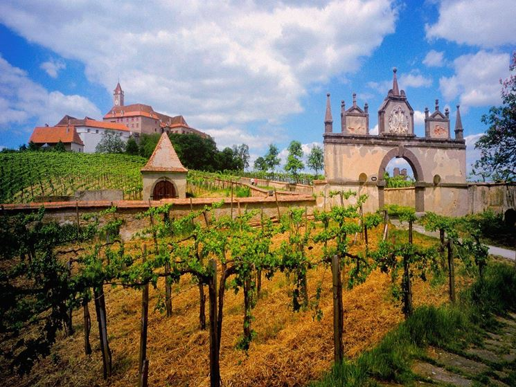 vigneti e casa vinicola