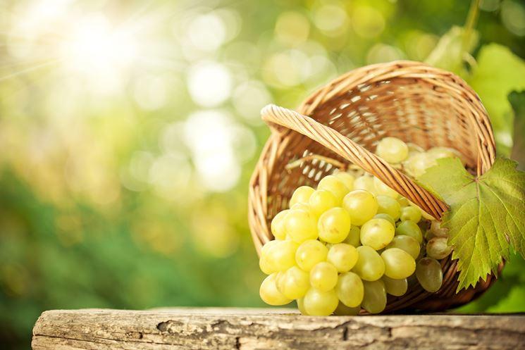 Uva da tavola uva uva da tavola - Vivai uva da tavola ...