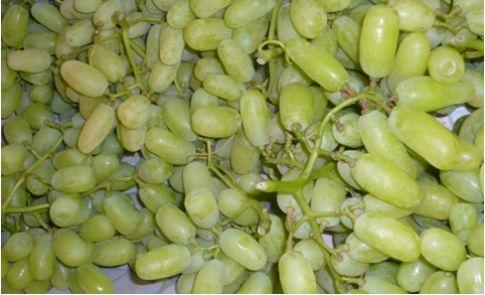 Uva da tavola uva uva da tavola - Vivai rauscedo uva da tavola ...