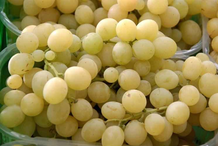 Varieta uva da tavola uva - Uva da tavola di mazzarrone ...