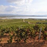 carignano vino