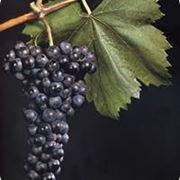 franconia vino