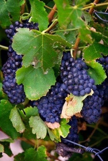 Il vino del contadino2