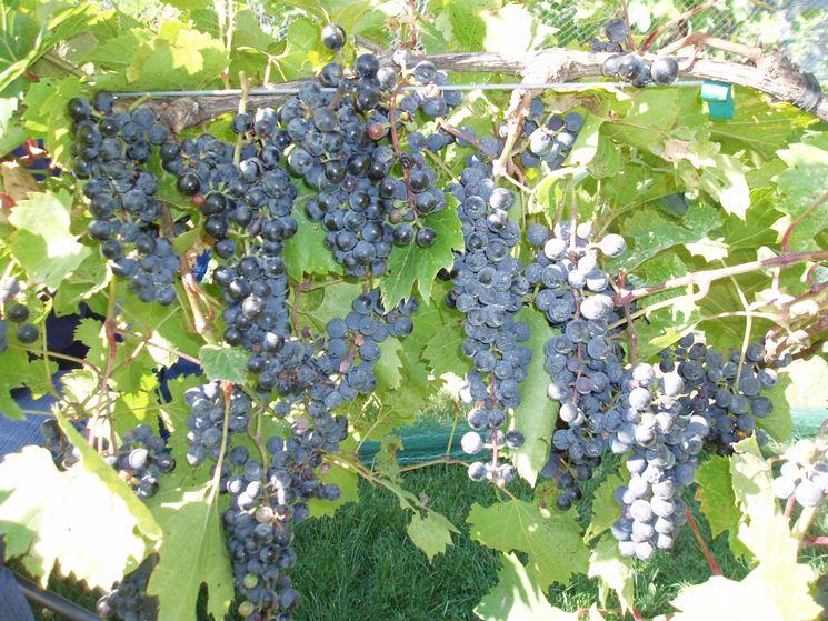 Il vino del contadino