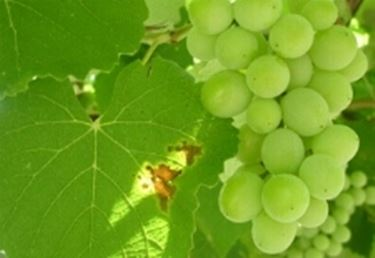 vino sfuso2