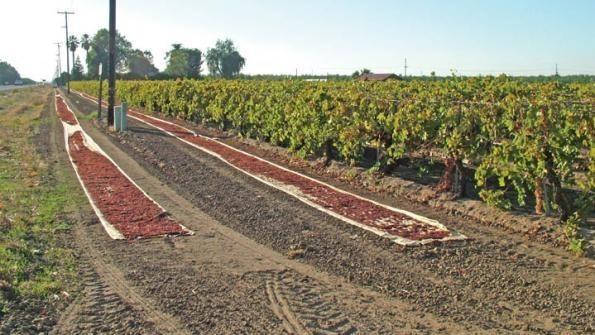 Prezzo uva da tavola prezzi del vino andamento prezzi - Tavola da giardino prezzi ...