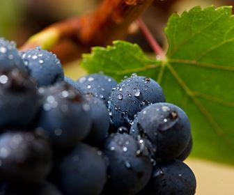 Vini rossi più bevuti