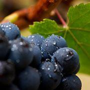 Vini rossi pi� bevuti