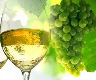 Vino bianco basilicata