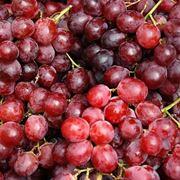 Vino rosso basilicata
