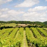 vino rosso emilia romagna
