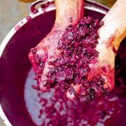 vino rosso friuli venezia giulia