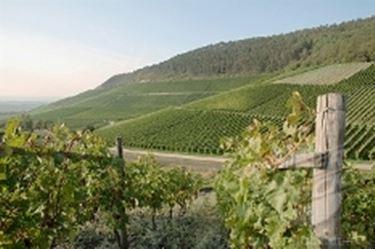 Vino rosso liguria